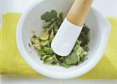 Making Canary Island coriander sauce (Mojo cilantro)