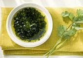 Canarian coriander sauce (Mojo cilantro) in bowl