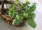 Basil, thyme and rosemary in basket