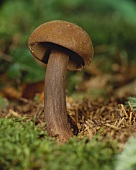 Mushroom in a wood