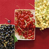 White-, red- and blackcurrants in cardboard punnets