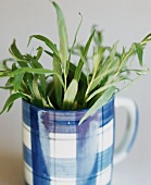 Tarragon in blue and white cup