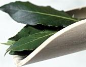 Bay leaves on wooden scoop