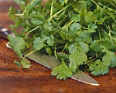 Fresh coriander leaves with knife