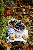 Blueberry muffins and basket of blueberries in forest