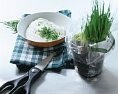 Quark with fresh chives