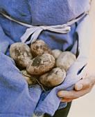 Person hält ungewaschene Kartoffeln in blauer Schürze