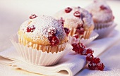 Blackcurrant muffins with icing sugar in paper case
