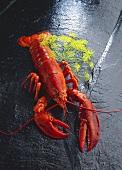 Boiled lobster on black granite