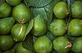 Green figs on leaves (filling the picture)