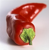 Red chili pepper (peperoncino)
