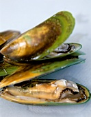 Green mussels (from New Zealand)