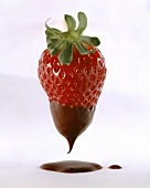 Strawberry, half-coated in chocolate