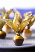Physalis in dark and white chocolate
