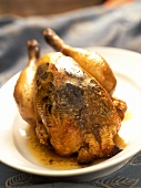 Roast chicken, studded with truffles