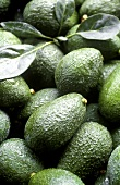 Australian avocados (filling the picture)