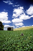 Vegetable farm in Australia