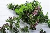 Bunch of fresh oregano with flowers