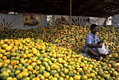 Indian market stall with fresh mangos