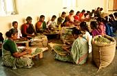Indische Frauen reinigen Kardamomkapseln