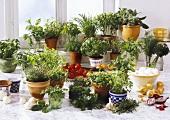 Viele verschiedene Kräuter in Topfen vor Küchenfenster