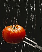 Tomato on meat fork in stream of water