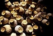 Ripe poppy seed capsules