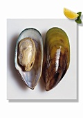 Opened green-shelled mussel