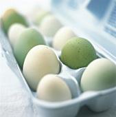 Various eggs in egg box