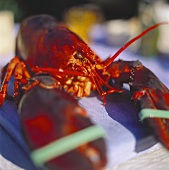 Lobster with tied pincers