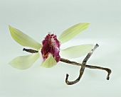 Vanilla pods and vanilla flower