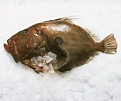 Fresh John Dory on ice