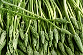 Green wild asparagus (filling the picture)