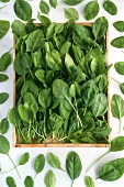 A box of spinach, surrounded by single spinach leaves
