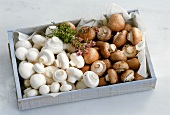 White and brown mushrooms in crate