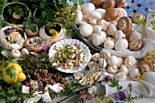 Still life with various types of mushrooms and herbs