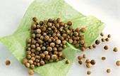 Coriander seeds on green paper