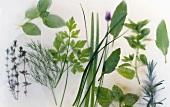 Various frozen herbs