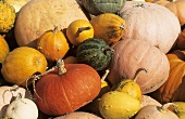 Various pumpkins (filling the picture)