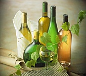 White wine bottles and glass of white wine; vine tendril