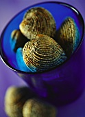 Clams in blue bowl