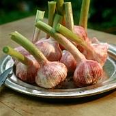 Fresh garlic on pewter plate