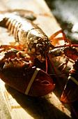 Fresh lobster from Bretagne