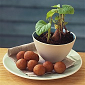 Marzipan potatoes and potato plant