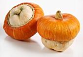 Mini-pumpkins (Turk's turban)