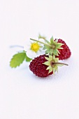 Wild strawberries and flower