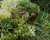 Kräutergarten mit alter Giesskanne
