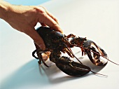 The correct way to handle a lobster