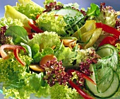 Mixed salad leaves with vegetables, without dressing