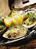 Oyster gratin in the shells
